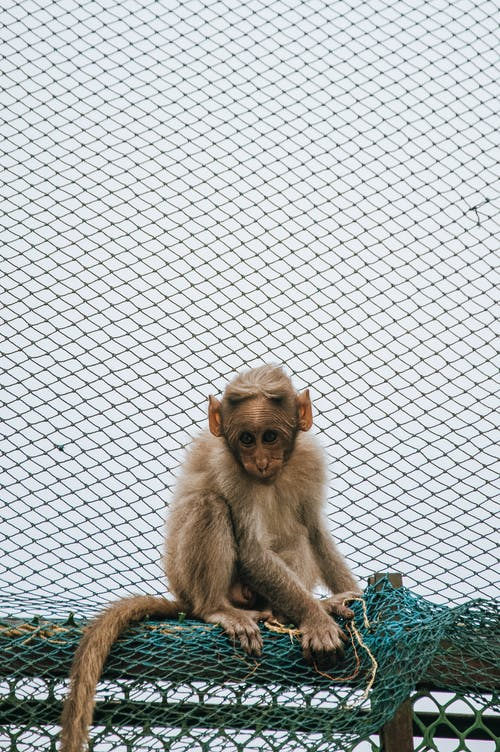 Foto stok gratis bersih, binatang, bulu