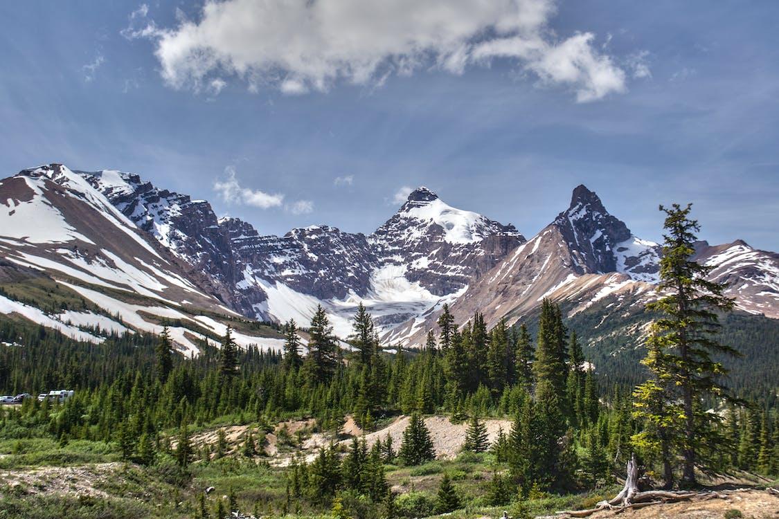 Pine Trees Near Mountain Landscape Photograph