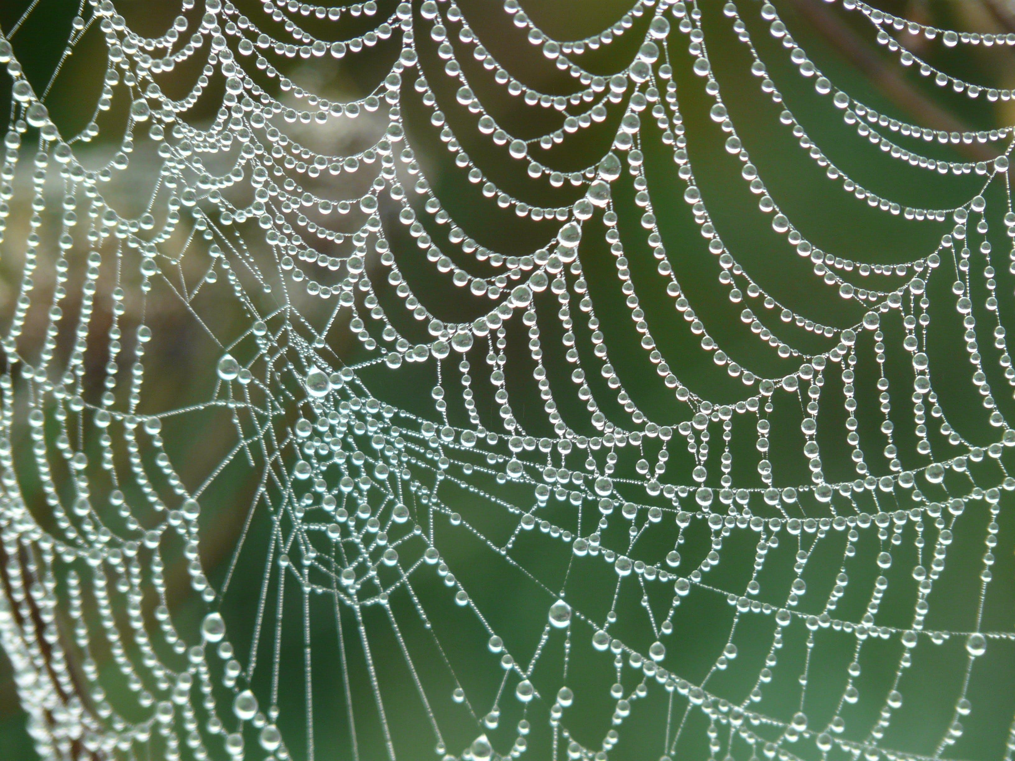 nahansicht, netz, spinnennetz