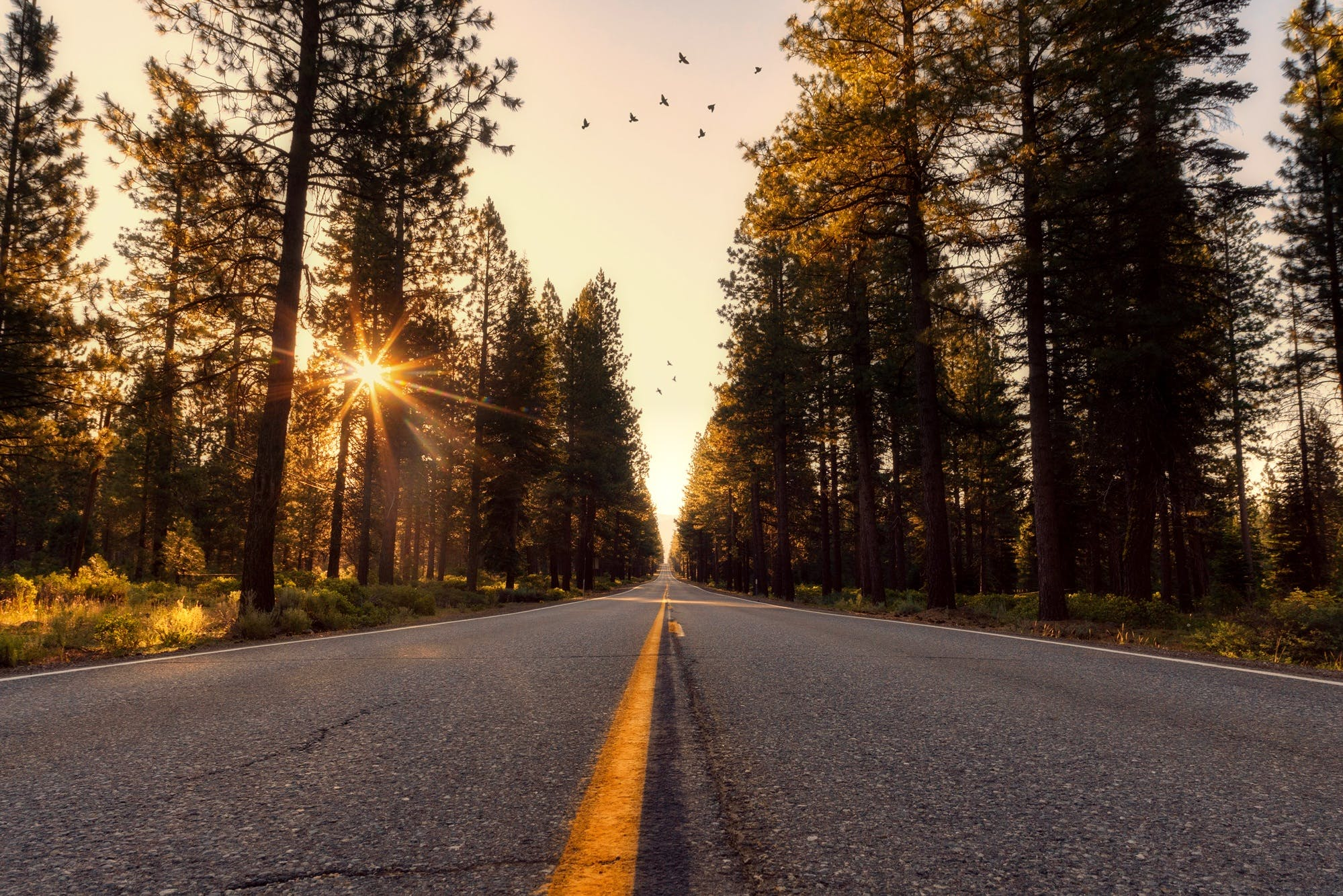 Foto profissional grátis de aconselhamento, alvorecer, árvores, asfalto