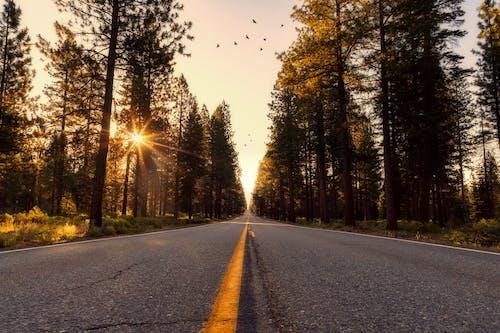 Imagine de stoc gratuită din anotimp, apus, arbori, asfalt