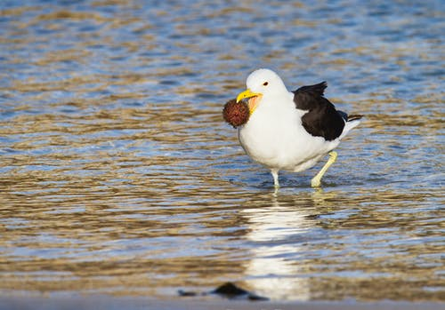 White and Black Bird on Water