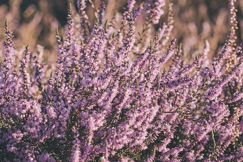 Foto stok gratis agustus, alam, alam yang indah