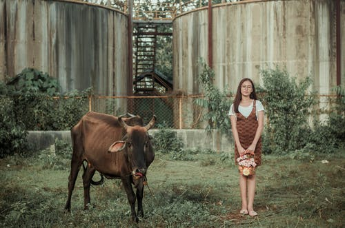 Young woman with bull in enclosure
