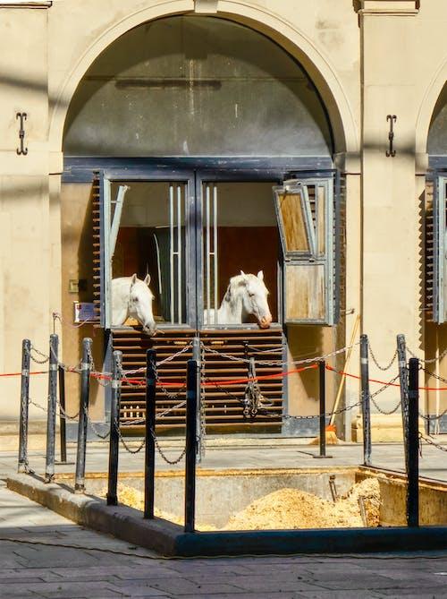 Fotos de stock gratuitas de al aire libre, arquitectura, blanco, caballo