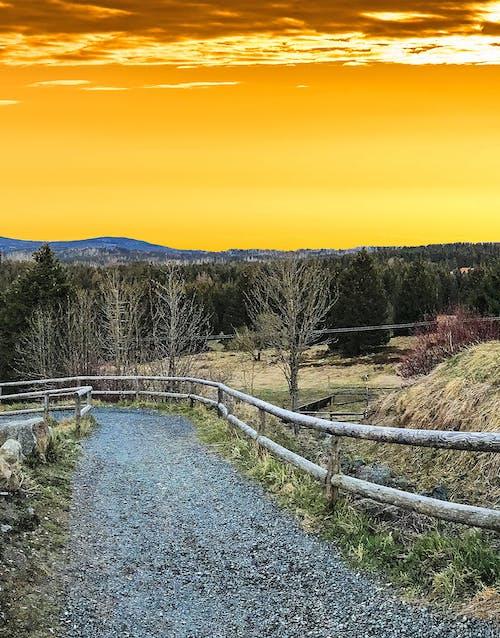 Ingyenes stockfotó aranysárga, ég, erdő, fa témában