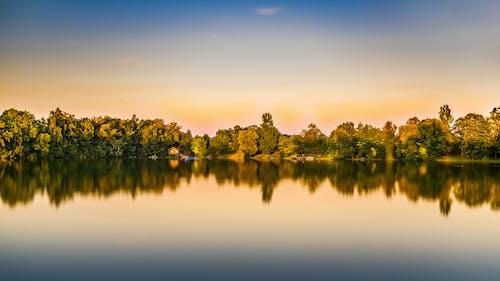 Grüne Laubbäume, Die Auf Gewässer Reflektieren