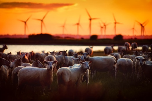 Free stock photo of landscape, sunset, agriculture, farm