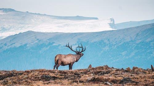 Kostenloses Stock Foto zu barbarisch, berg, draußen, eis