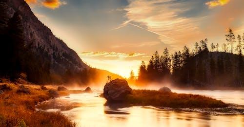Kostnadsfri bild av berg, dimma, gräs, gryning