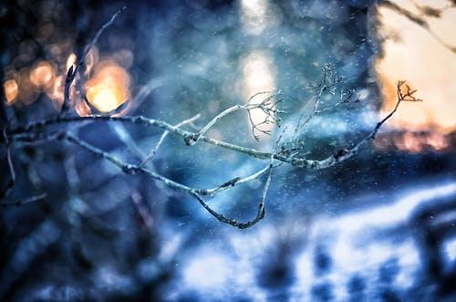 Immagine gratuita di congelando, congelato, freddo, gelido