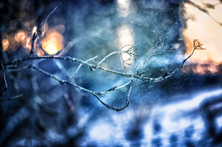 New free stock photo of cold, snow, nature