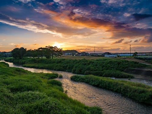 คลังภาพถ่ายฟรี ของ คุมาโมโตะ, ต้นไม้, ตะวันลับฟ้า, ท้องฟ้า