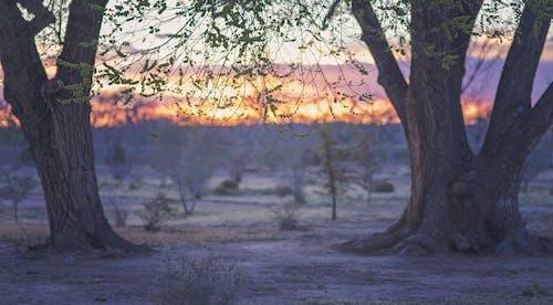 คลังภาพถ่ายฟรี ของ ดวงอาทิตย์, ต้นไม้, ตอนเย็น, ตะวันลับฟ้า