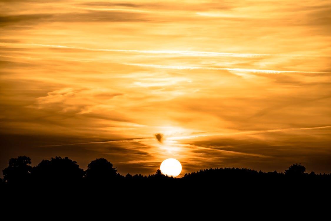 alba, arbres, atmosfèric