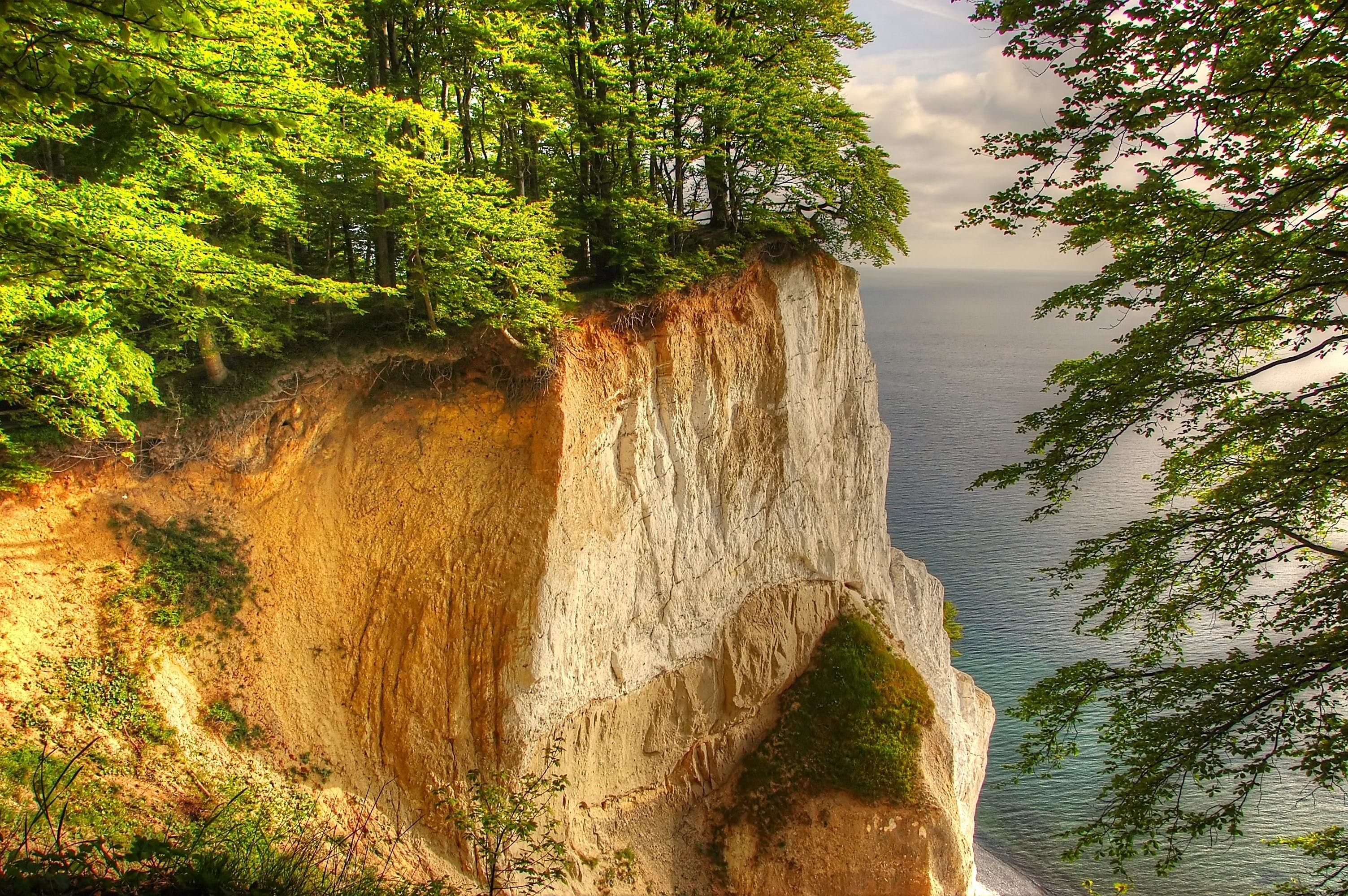 Landscape Photography of Tall Trees on Cliff