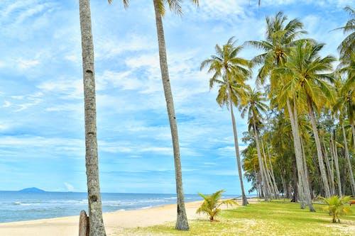 Základová fotografie zdarma na téma dovolená, idylický, kokosové palmy, krajina