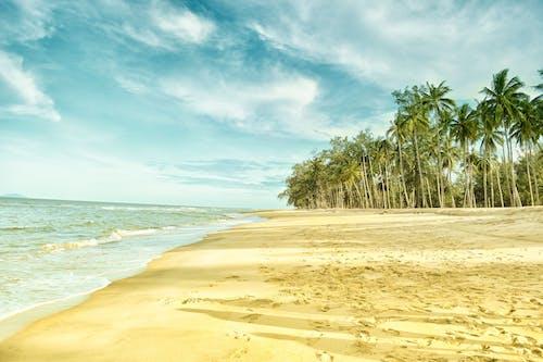 Palmbomen Dichtbij Strandkust