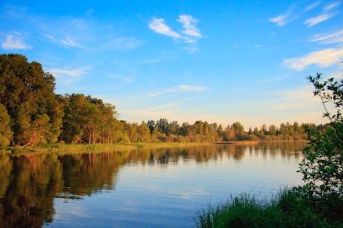 Imagine de stoc gratuită din apă, arbori, corp de apă, lumina zilei