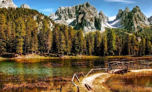 ağaçlar, bataklık, çevre, çim içeren Ücretsiz stok fotoğraf
