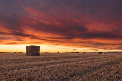 Бесплатное стоковое фото с закат, культивация, небо, облака