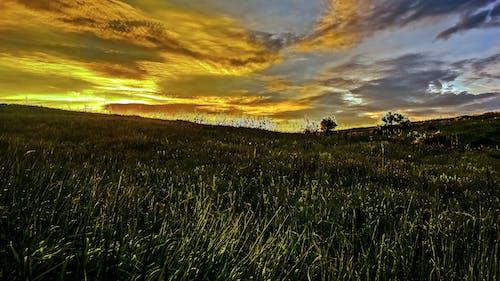 Бесплатное стоковое фото с вечер, закат, зерновые, небо