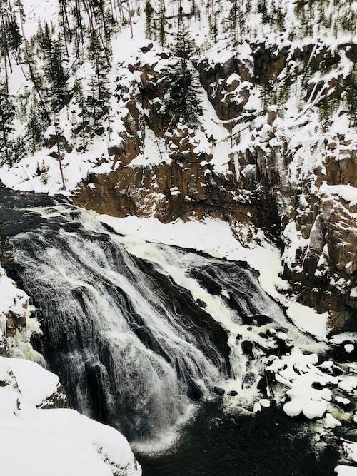 Immagine gratuita di acqua, albero, cascata