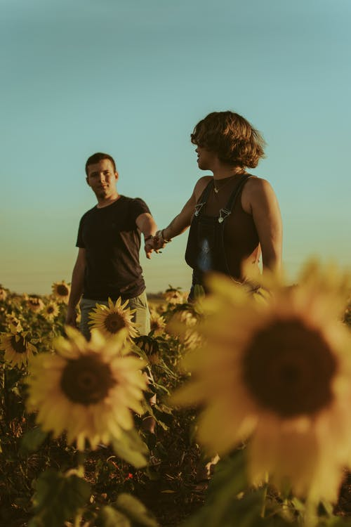 From below of loving couple holding hands and looking at each other while walking on plantation with sunflowers in summer