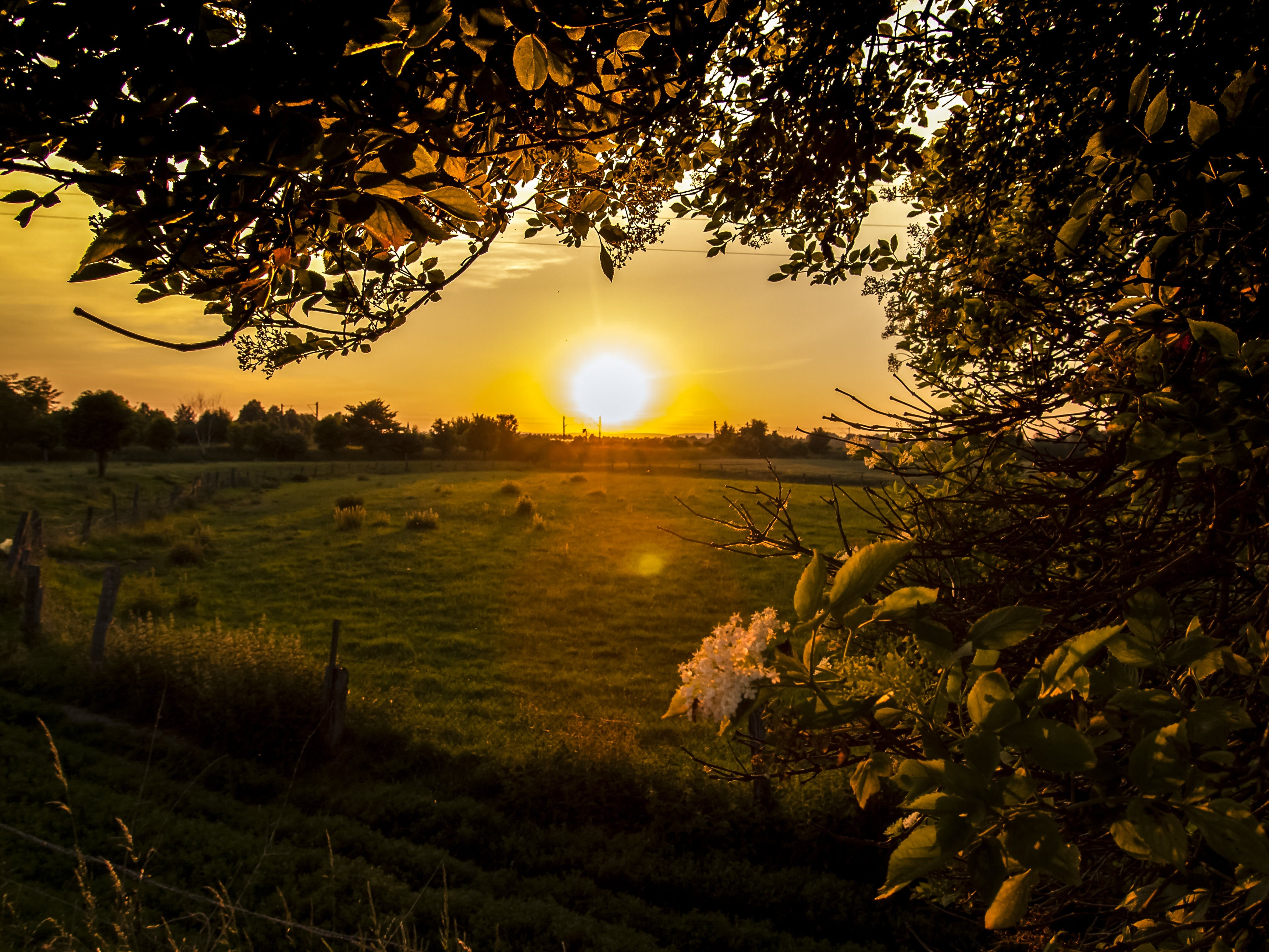 Wide Angle Photography of Green Grass Field during Sunset