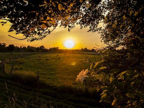 Foto d'estoc gratuïta de alba, arbres, camp, capvespre