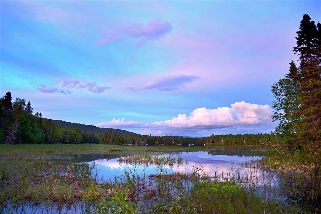 Trees Near Lake Under Blue Sky
