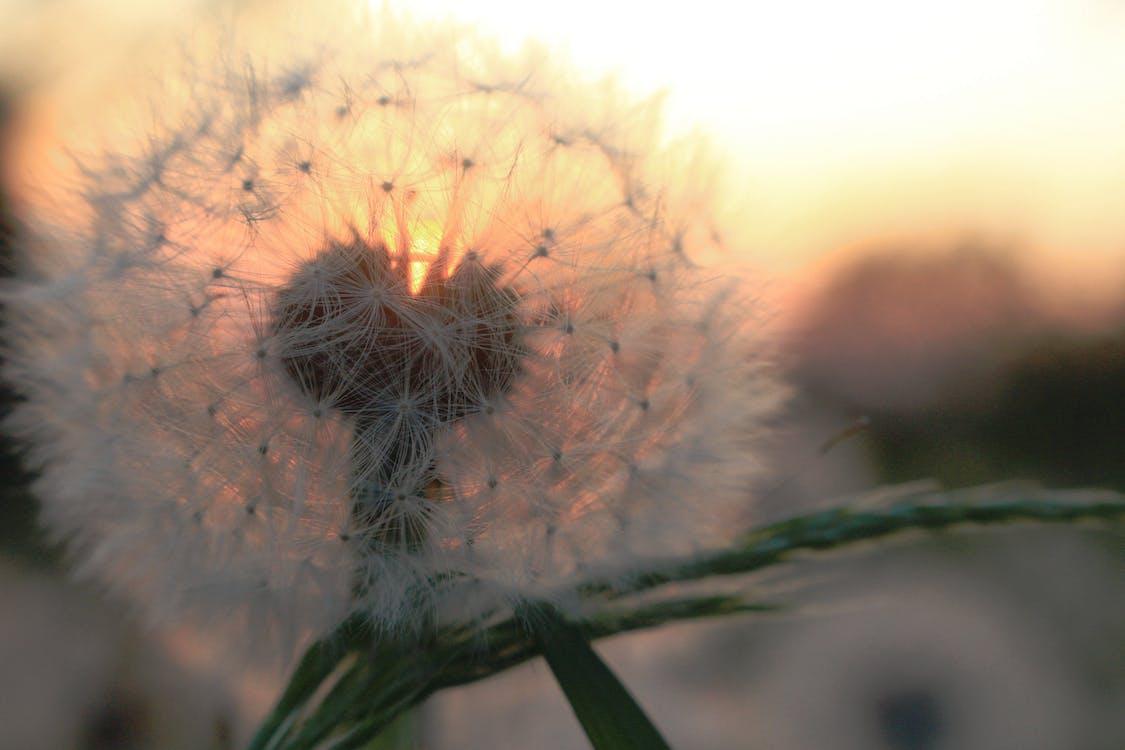 bane, blomst, close-up