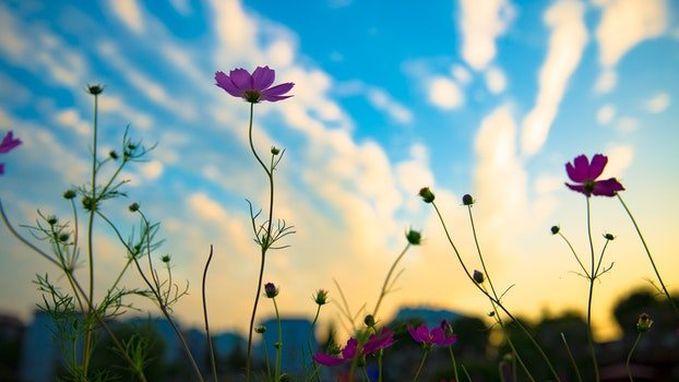 Free stock photo of nature, sky, clouds, flowers