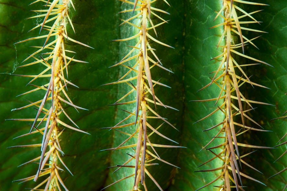New free stock photo of plant, cactus, macro