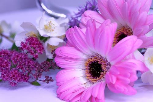Photos gratuites de amour, botanique, brillant, coloré