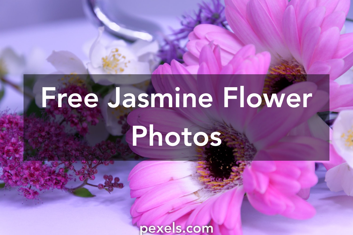 1000 Engaging Jasmine Flower Photos Pexels Free Stock Photos
