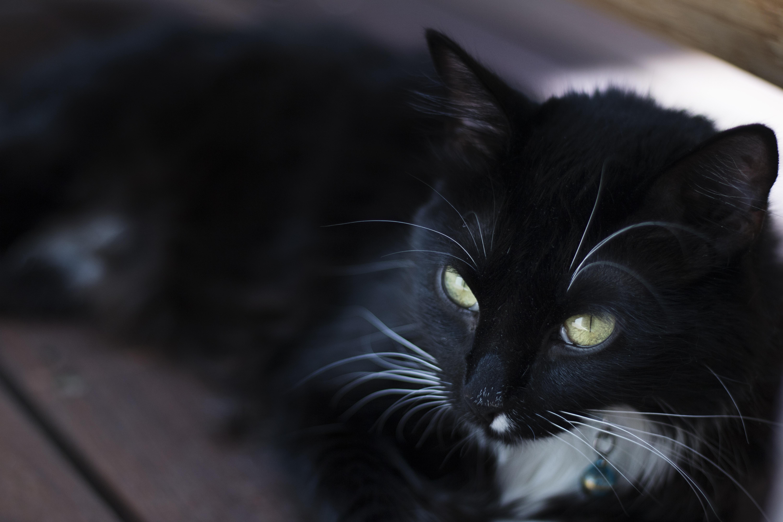 Black Cat  Fm