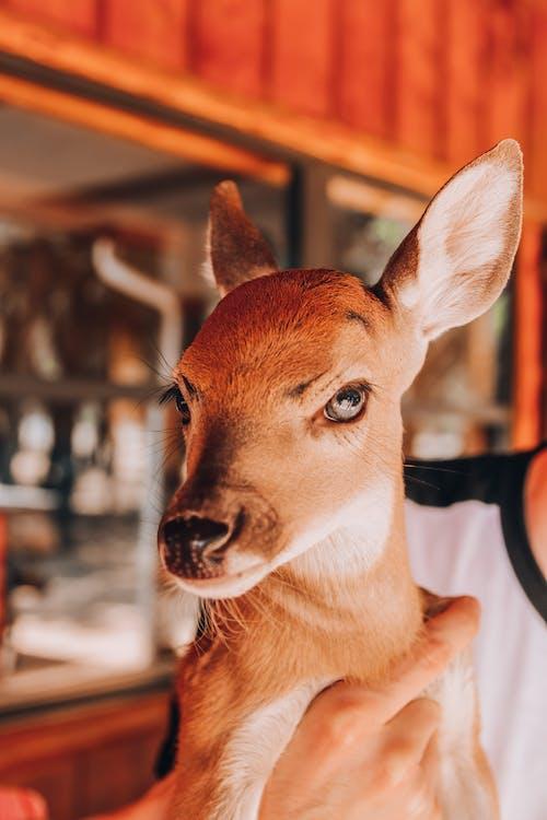 Crop person caressing little deer near bright wall