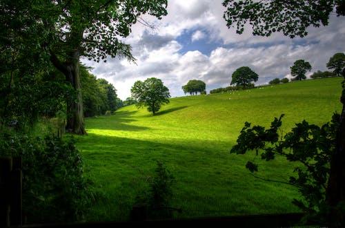 Základová fotografie zdarma na téma hřiště, krajina, mraky, pole