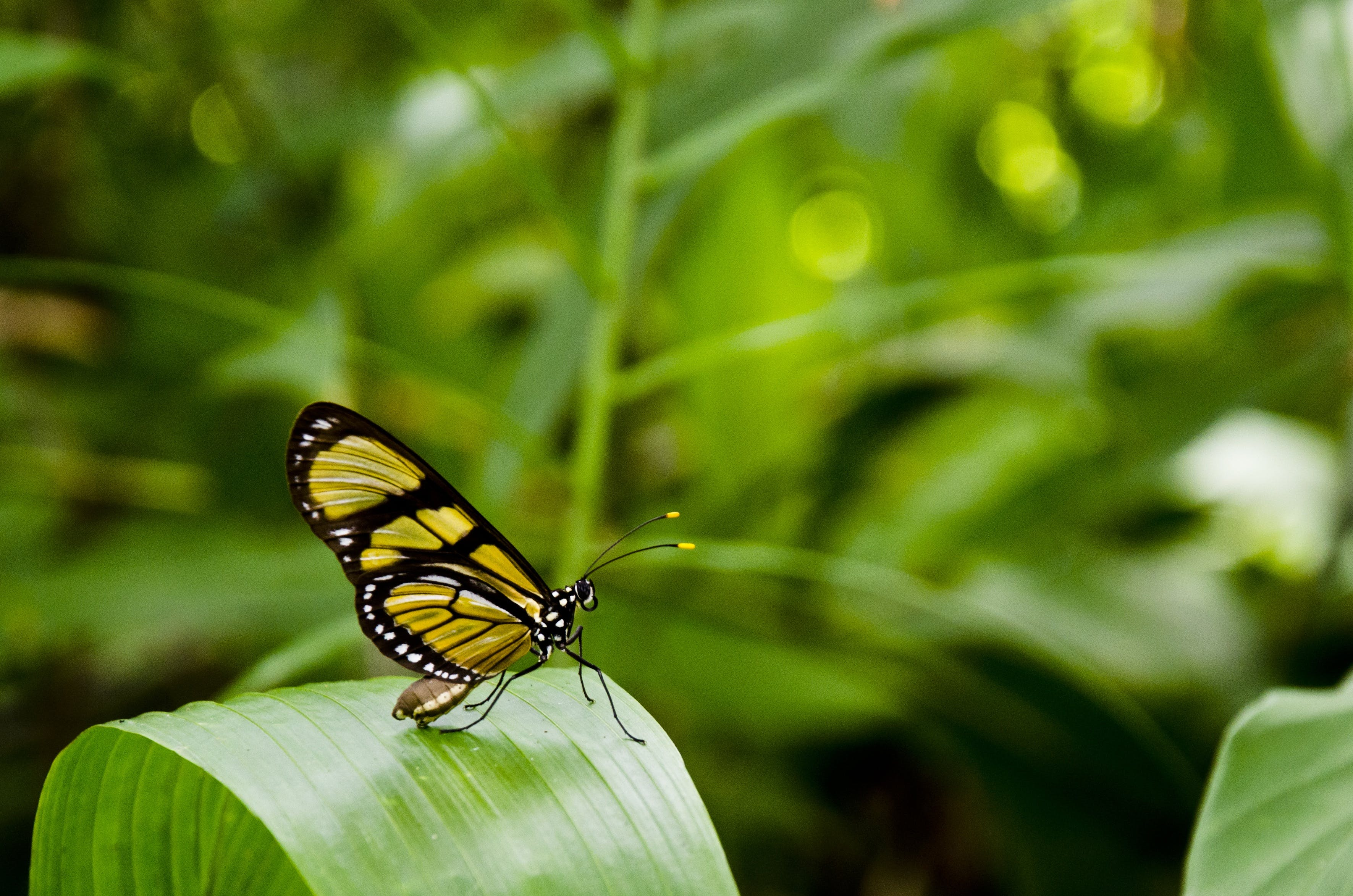 Yellow and Black Butterfly on Top of Green Leaf