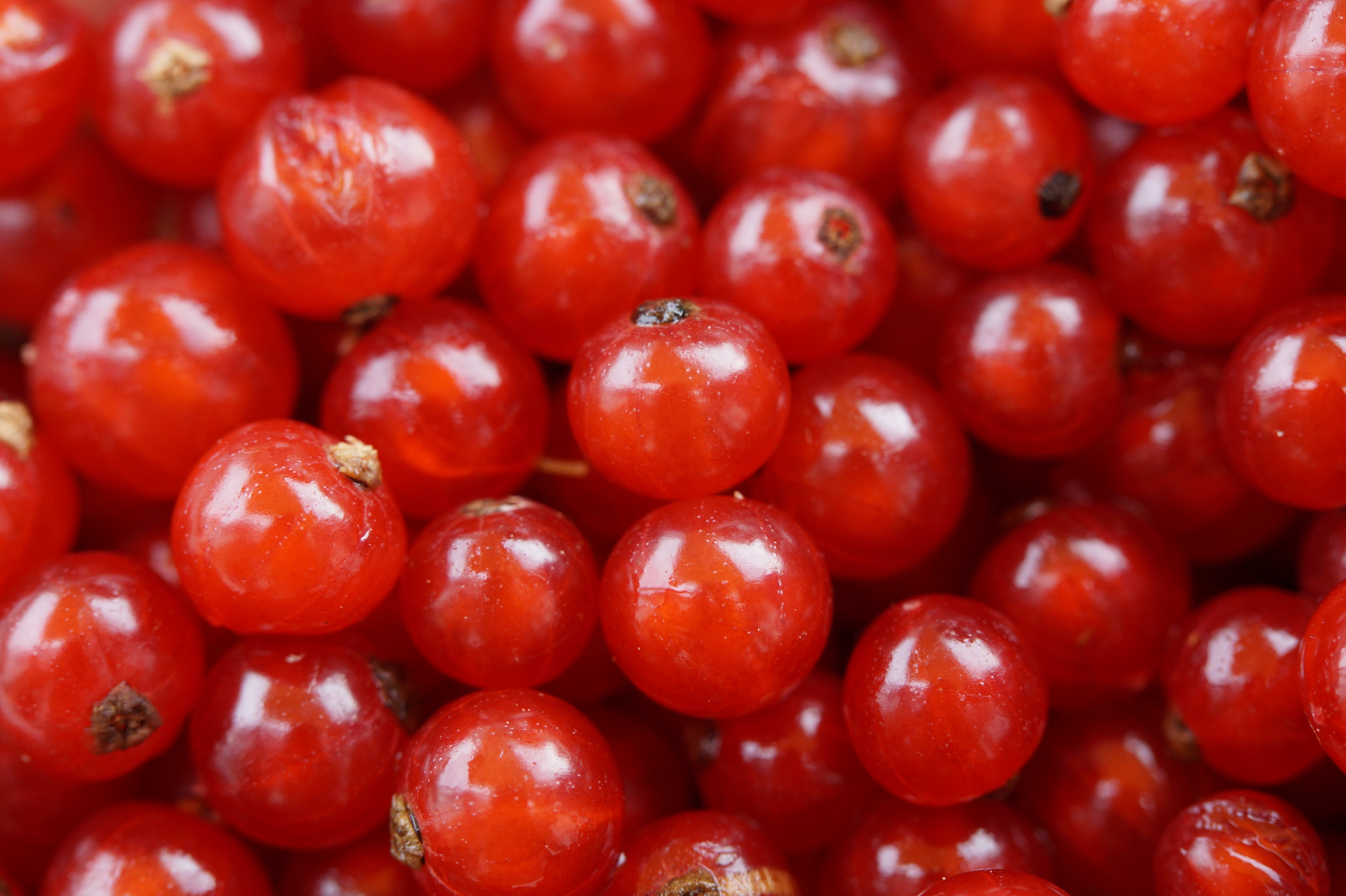 Red Round Small Fruit