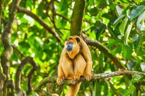 Безкоштовне стокове фото на тему «висіння, Деревина, дерево, джунглі»