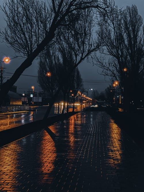 Wet lonely sidewalk between leafless trees and flashlights near asphalt city road at night
