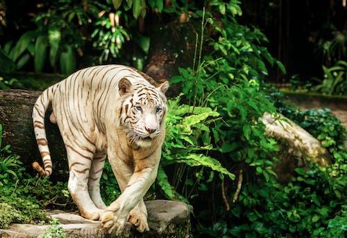 고양이, 공격적인 처분, 나무, 동물의 무료 스톡 사진