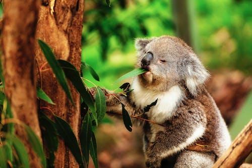 귀여운, 나무, 눈, 동물의 무료 스톡 사진