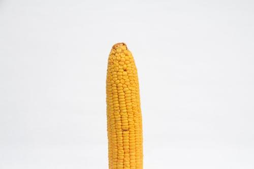 Yellow Corn on White Background