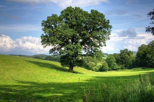 ağaçlar, alan, bulutlar, çayır içeren Ücretsiz stok fotoğraf
