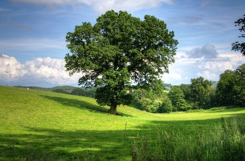Kostenloses Stock Foto zu ackerland, bäume, feld, gras
