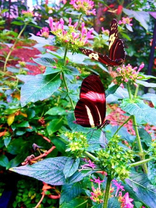 Δωρεάν στοκ φωτογραφιών με πεταλούδες