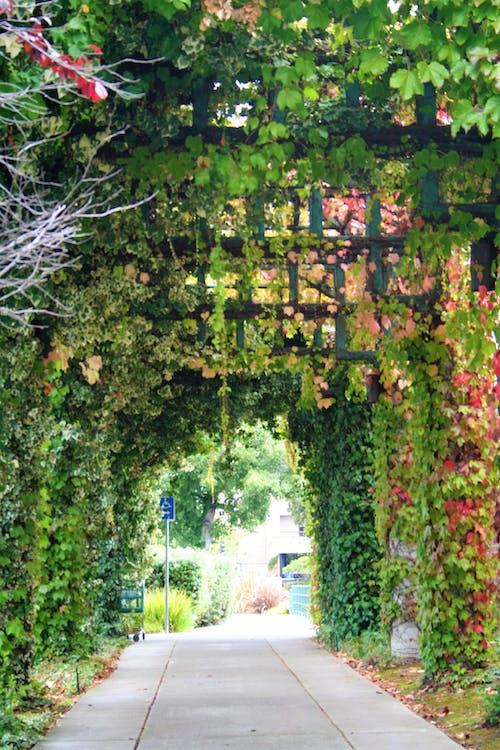 คลังภาพถ่ายฟรี ของ ซุ้มประตู, ต้นไม้, ไม้เลื้อย